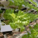 hydroponics 4255403
