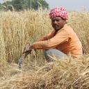 wheat fields 762213 960