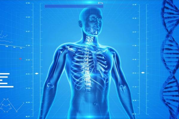 human skeleton 163715 960