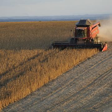 soybeans 1543071